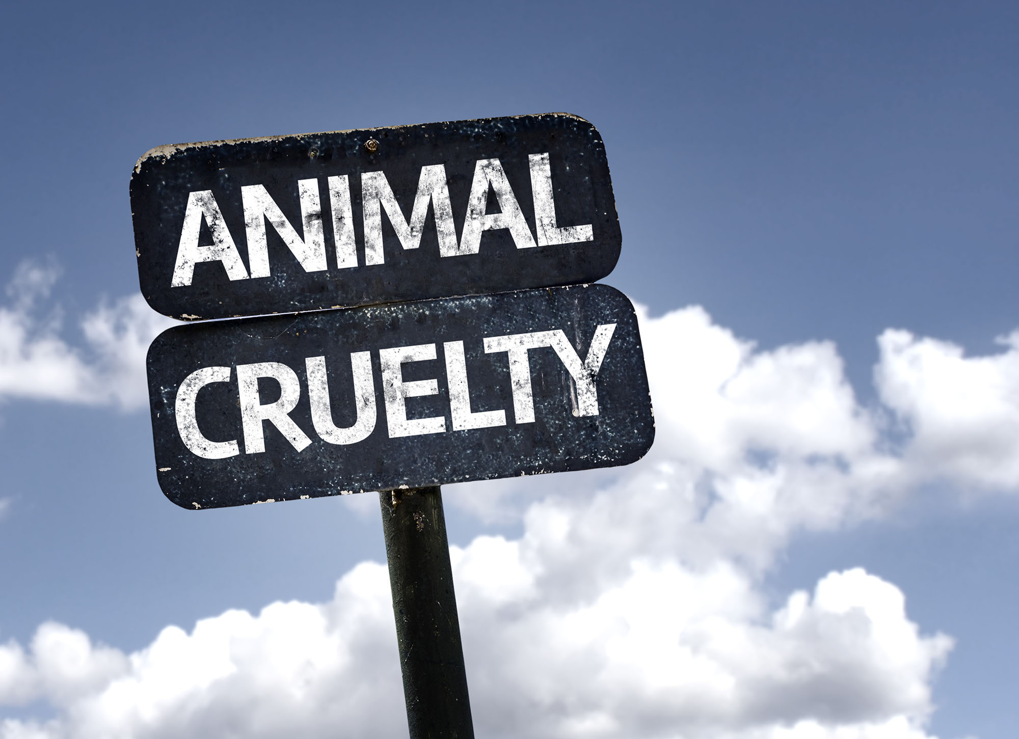The Penalties for Animal Cruelty in Arizona